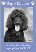 "Standard Poodle-Happy Birthday - ""From The Dog"" Theme"